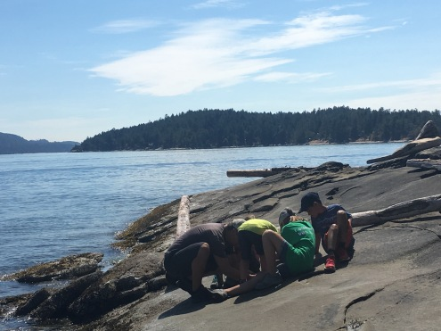 Just looking at tide pools
